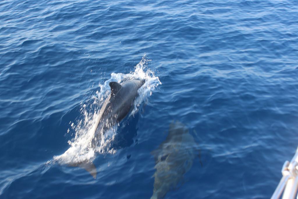 15 Delfine zur BegrÅssung